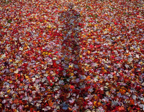Alot of leaves..