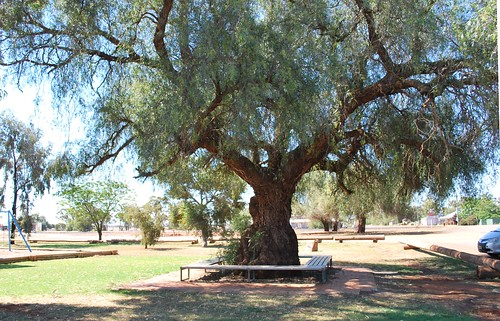 Pepper Tree, Tullibigeal