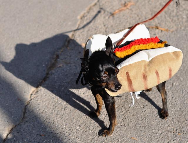 Hot Dog - By Pega
