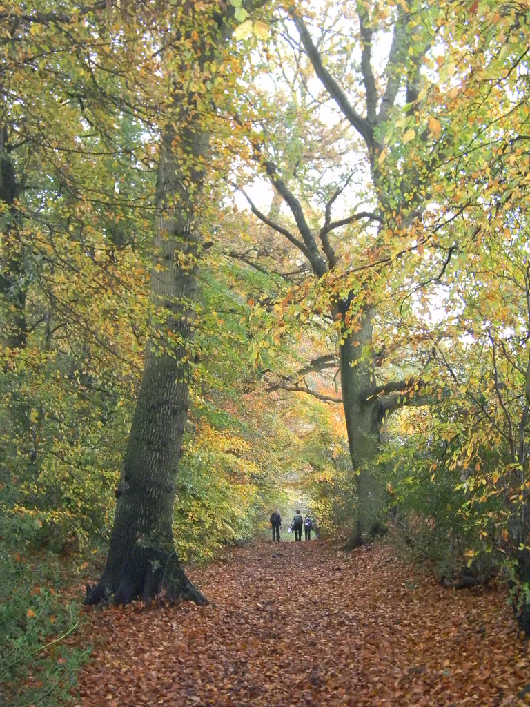 Autumn Colours 1 Princes Risborough to Great Missenden Monkton Wood