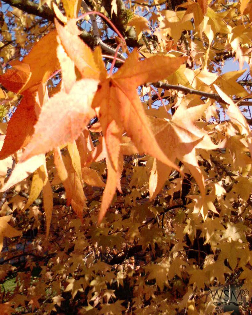5 years ago... Autumn