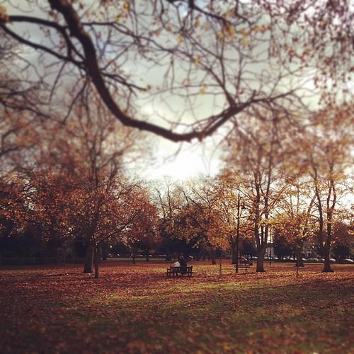 OAP AUTUMN MEETING #london #wanstead #autumn #leaves #oap