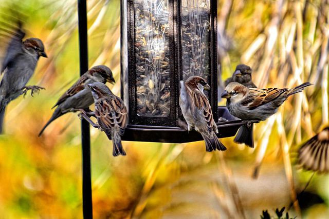 Busy Lunch time at the Bird Feeder.
