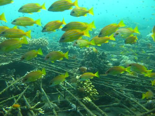 Mergulho em Tulamben