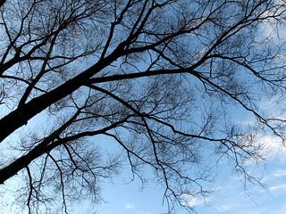 (317/365) Old tree
