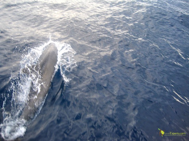 Top Places for Dolphin and Whale Watching in Costa Rica