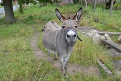 mare(0.0), grazing(0.0), wildlife(0.0), animal(1.0), donkey(1.0), mule(1.0), pack animal(1.0), fauna(1.0), pasture(1.0),