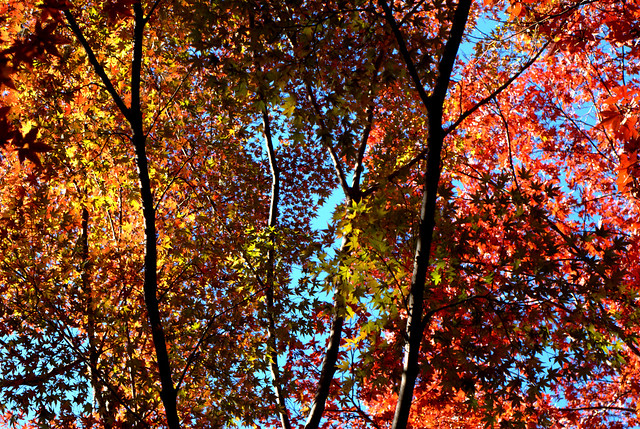 Autumn stained glass
