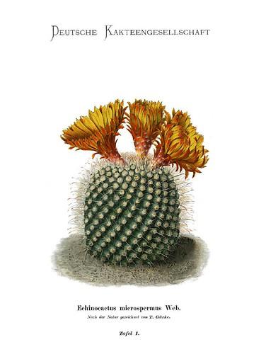 001-Bluhende Kakteen (Iconographia Cactacearum)-Tomo 1-1904-1921- Karl Moritz Schumann y otros-cortesía de www.cactuspro.com