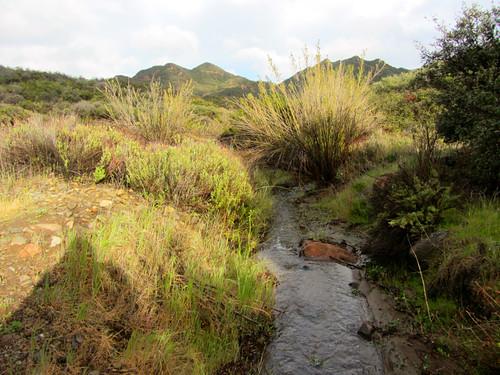 sudden creek