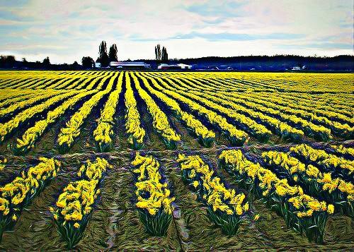 03-27-12 Funky Field by roswellsgirl