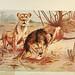 Brehm's Life of animals : Volume 1, Mammalia