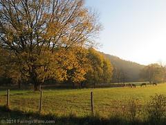 Autumn morning in Donkeyland 1