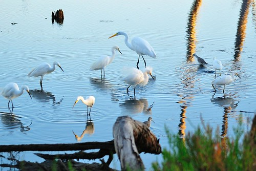 Egret Convention