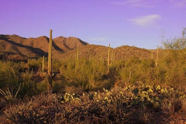 Tucson Desert Flickr Photo Sharing