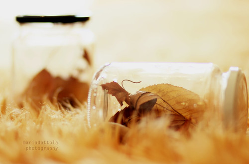 Autumn in a bottle.