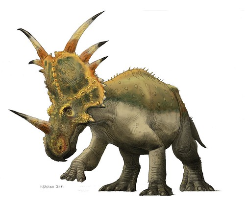 styracosaurus color