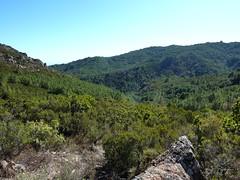 Sentier Capeddu-Sari : dans la descente de Bocca di Renosu, la vallée du ruisseau de Favone