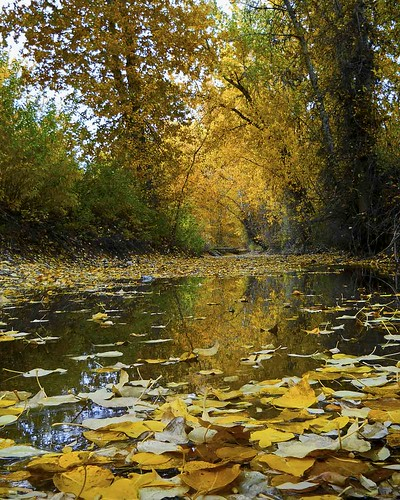 autumn fall creek idaho bellevue howardpreserve edminsterphotography