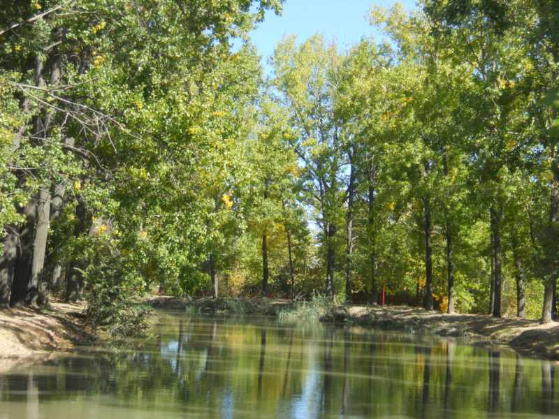 Arboles sobre el agua del Canal de Castilla