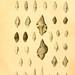 Donum Bismarckianum