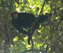 Guyana-0505
