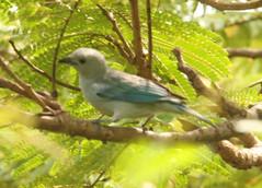 Guyana-0900