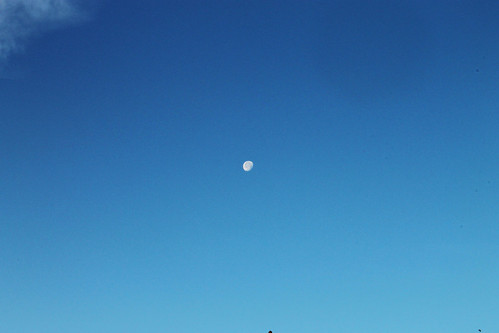 Morning Moon (115)