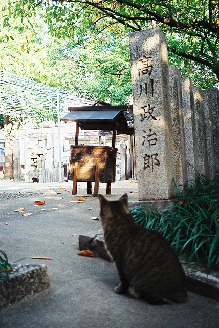 一隻貓的風景