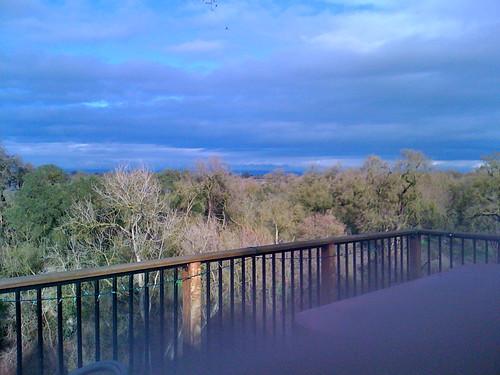 riverbank ipe arrowwood