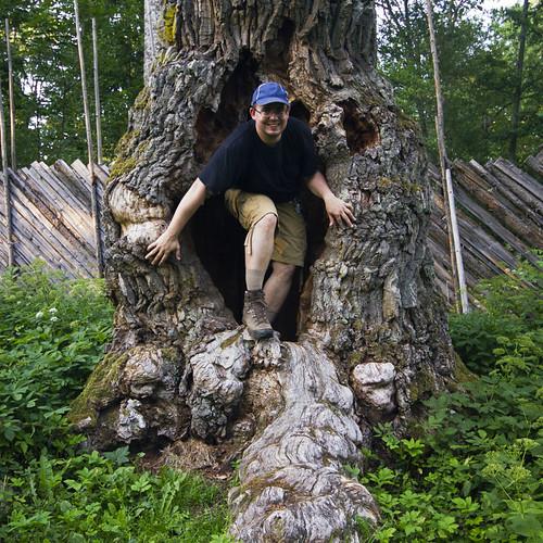 portrait person oak hole sweden trunk sverige östergötland sigma1020mmf456exdchsm bjärkasäby johanklovsjö canoneos7d