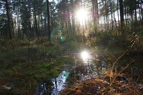 autumn sun fall water forest scenery view maisema vesi metsä syksy aurinko suomifinlandluontonaturelandscape