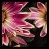 #weeklymarket #flowers