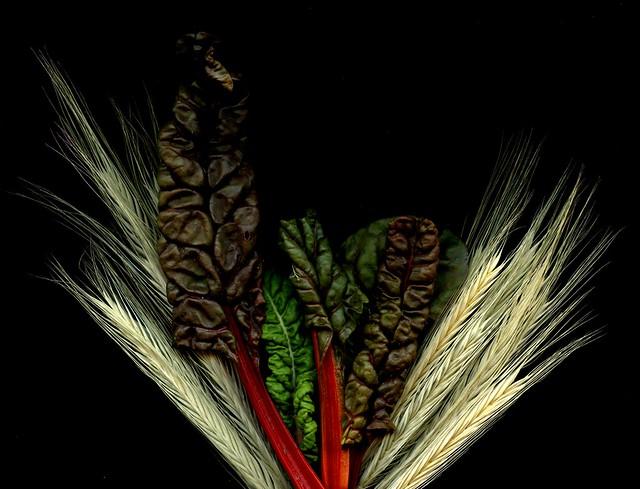 52745 Beta vulgaris subsp. maritima