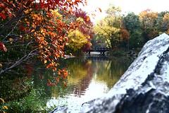 The Bridge - Central park - NY