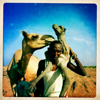 Somali nomad carrying camel new born  thru Iphone Hipstamatic  - Somaliland