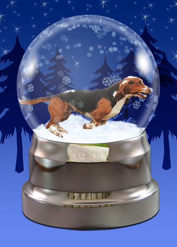 Charlie in the snow...globe