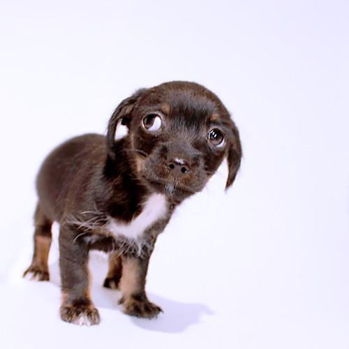 Tiny Rachel by BARKtucson