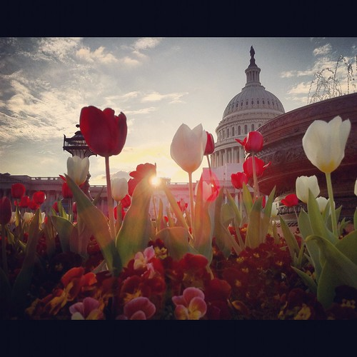 Congressional Spring Sunset