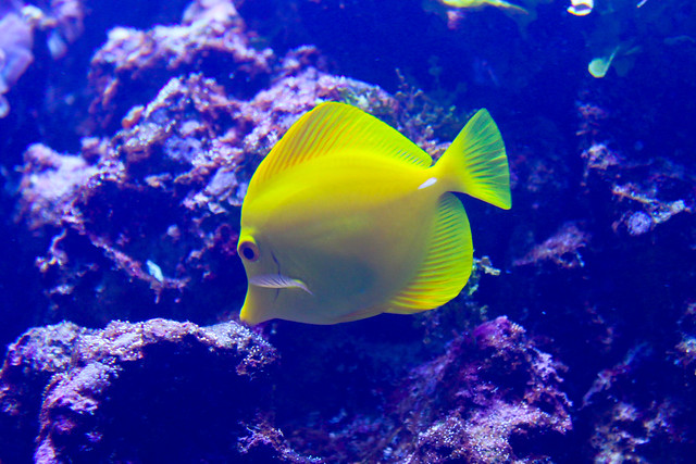 Coral reef fish yellow - photo#2
