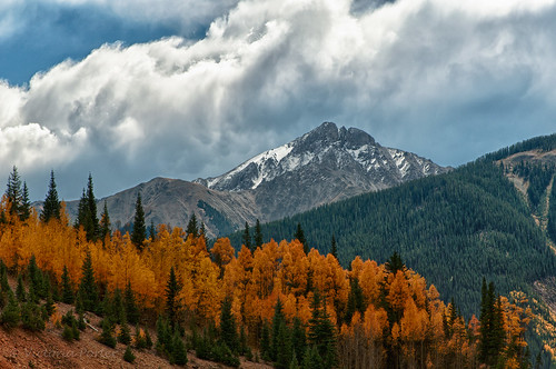 Aspens ablaze under cloudy skies in the Colorado Rockies...
