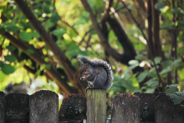 Another backyard friend