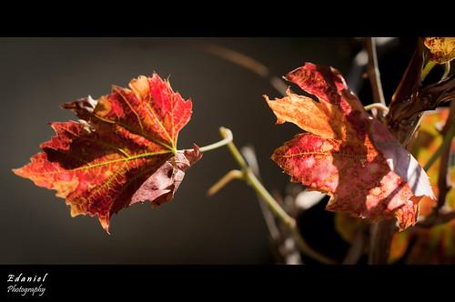 Fall is here, here again