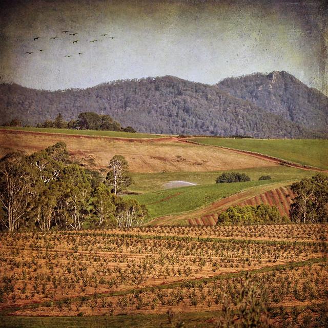 > Diagonal landscape <