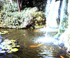 1972 - Waterfall, Sunken Gardens, St. Petersburg FL