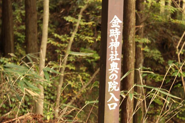 20111112_金時山_0051