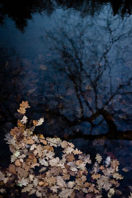 Herbstreflektion I