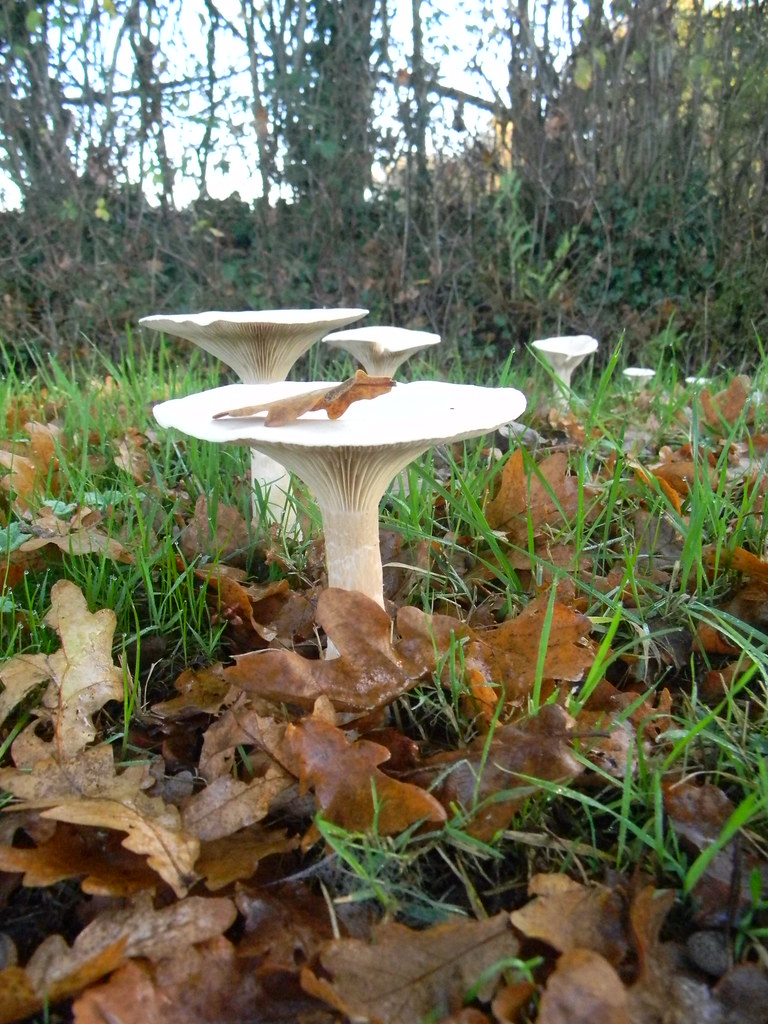 Fungi Buxted Circular