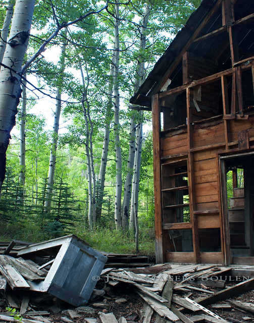 A stark contrast between an abandoned mountain cabin in ruins and the green aspen forest that surrounds it.