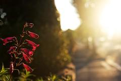 Lugn härlig Morgon